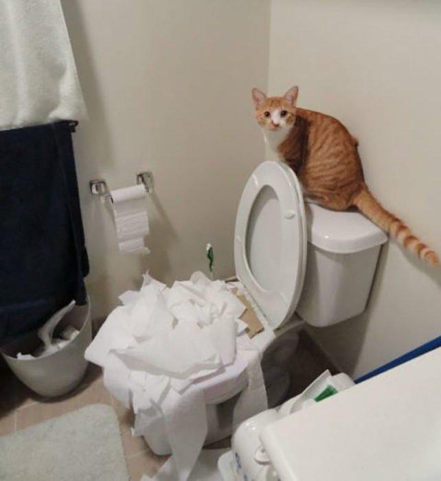Mascotas-hacen-desastres-cuando-estan-solos-1-642x700