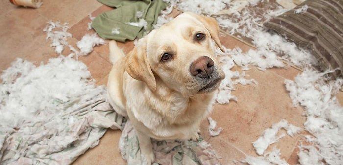 Mascotas-hacen-desastres-cuando-estan-solos-15