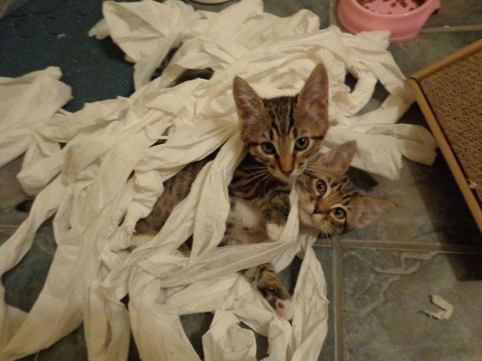 Mascotas-hacen-desastres-cuando-estan-solos-2