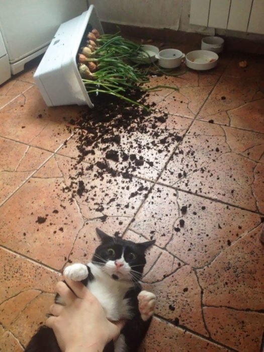 Mascotas-hacen-desastres-cuando-estan-solos-21-525x700