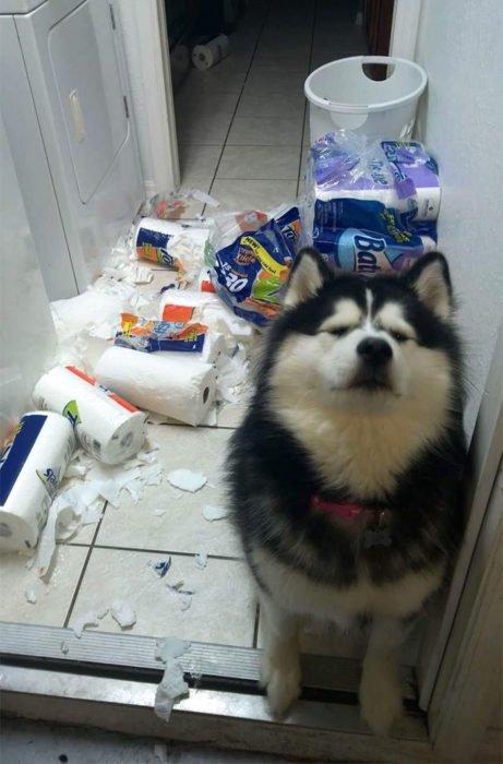 Mascotas-hacen-desastres-cuando-estan-solos-22-461x700