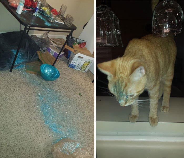 Mascotas-hacen-desastres-cuando-estan-solos-23