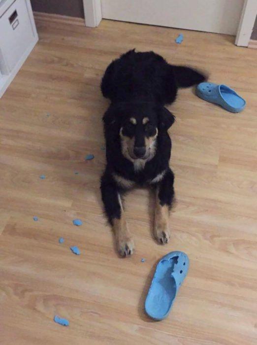 Mascotas-hacen-desastres-cuando-estan-solos-25-522x700