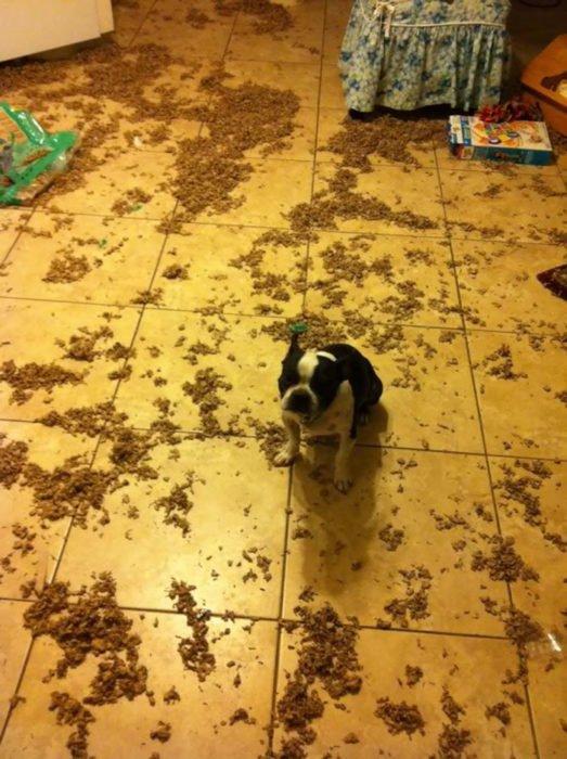 Mascotas-hacen-desastres-cuando-estan-solos-26-523x700