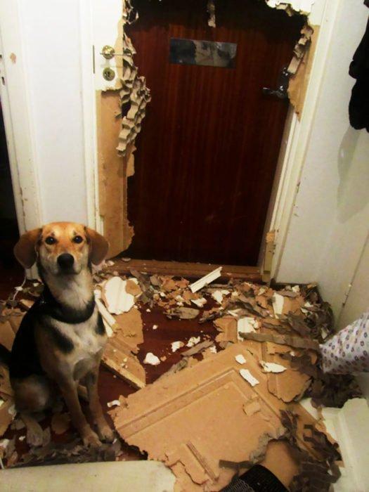 Mascotas-hacen-desastres-cuando-estan-solos-27-525x700