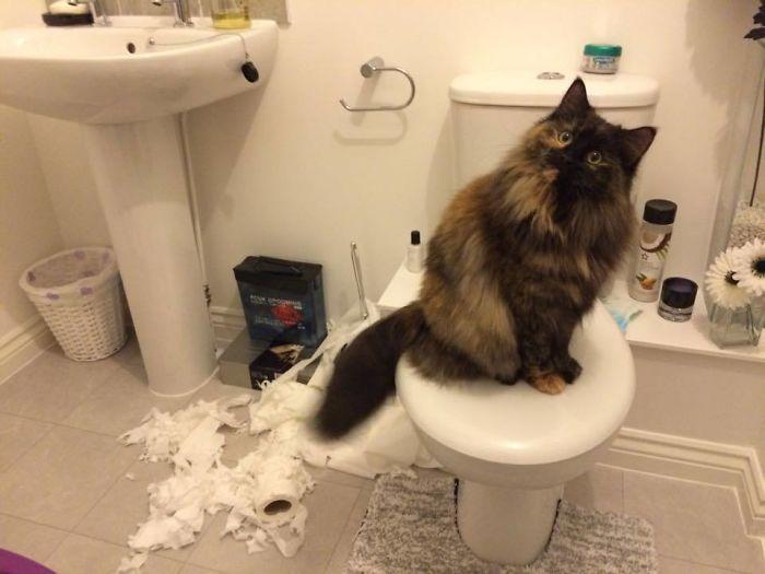 Mascotas-hacen-desastres-cuando-estan-solos-6