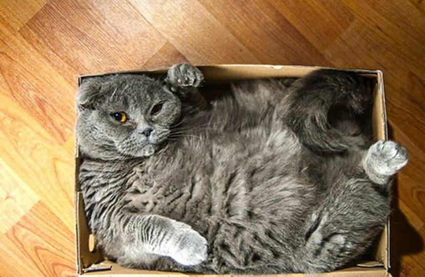 Gato-dormido-11-e1505418609821