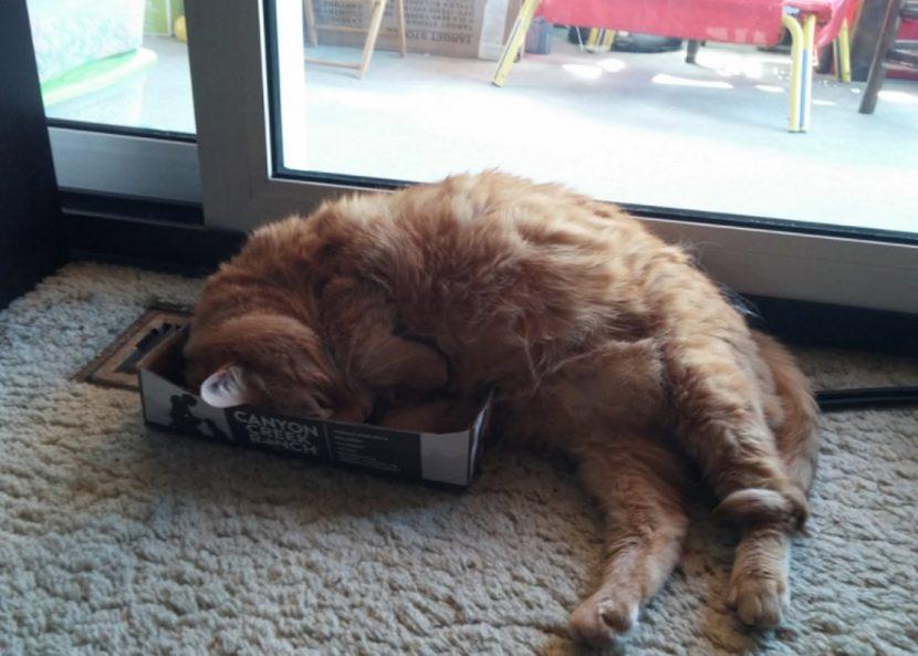 Gato-dormido-12-e1505418628688