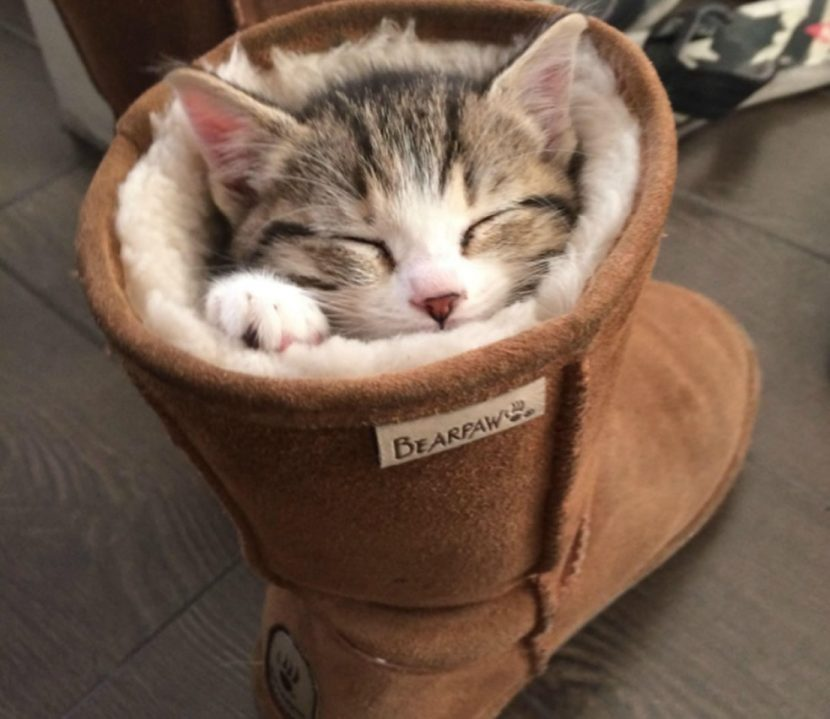 Gato-dormido-3-e1505418468479