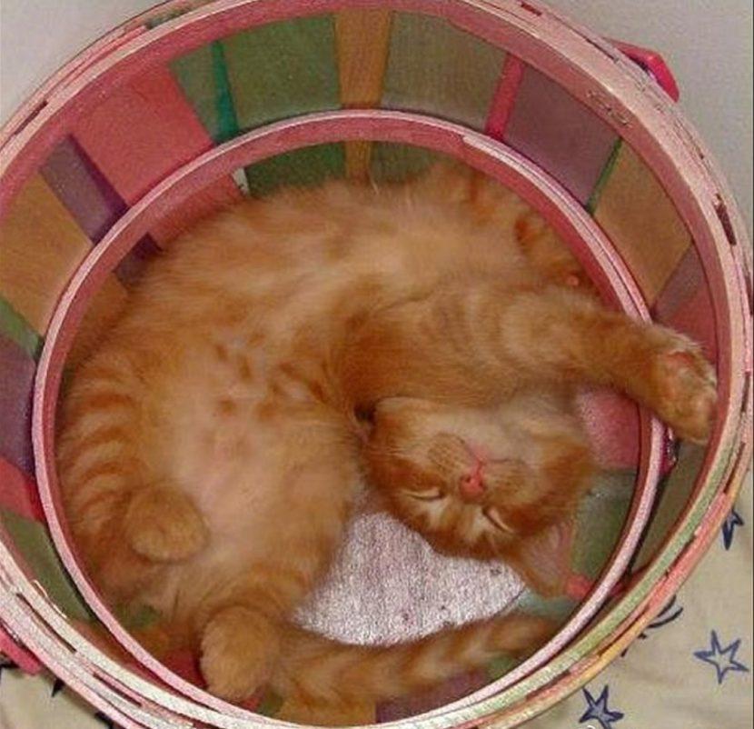 Gato-dormido-4-e1505418485692