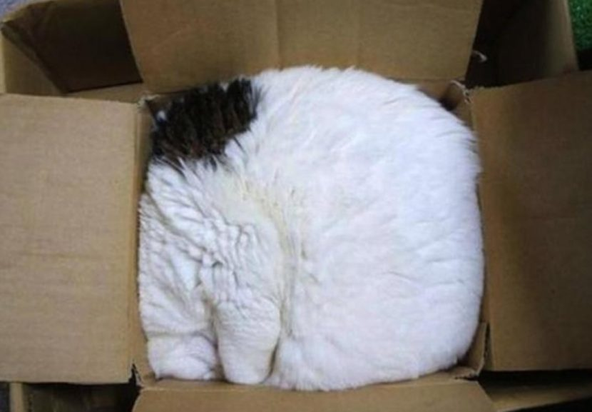 Gato-dormido-5-e1505418507712