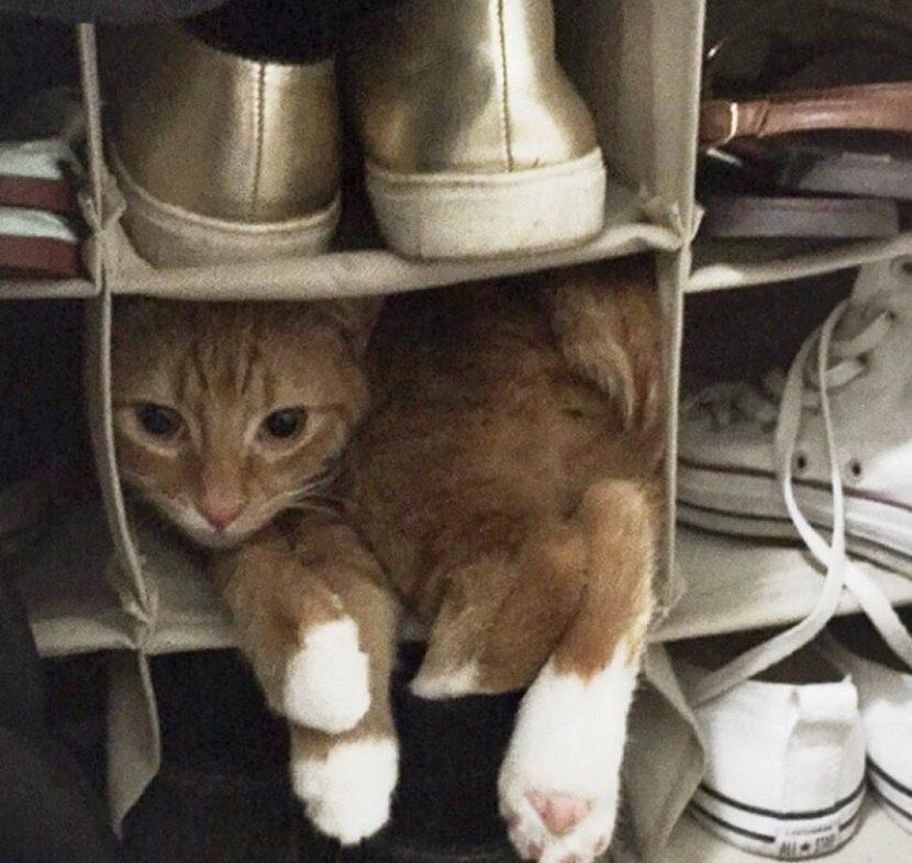 Gato-dormido-8-e1505418557853