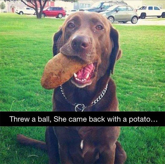 funny-gifts-pets-brought-their-humans-5-59b263e8c73fd__700