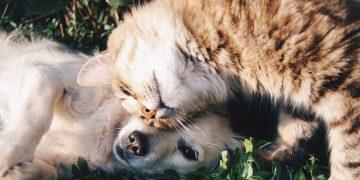 perro-gato-adopcion