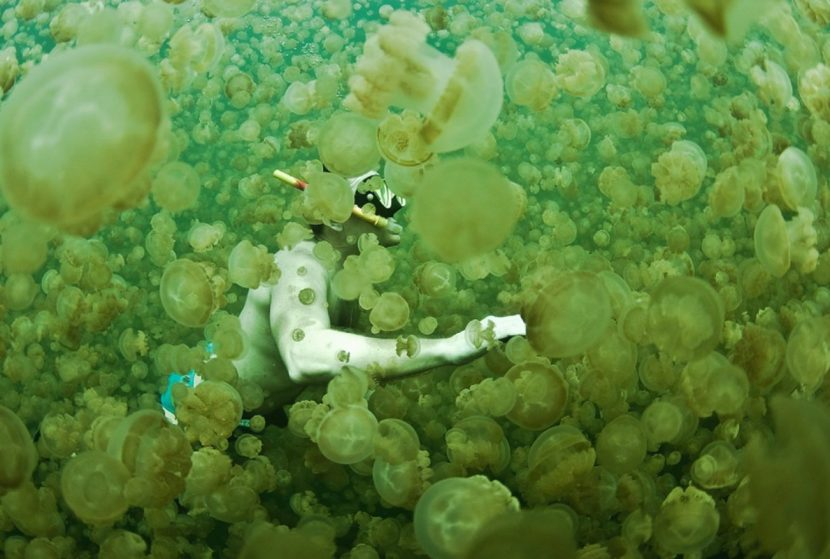 Datos-curiosos-de-la-medusa-9-e1507749780954